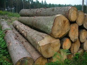 Mepal_Wood_Log